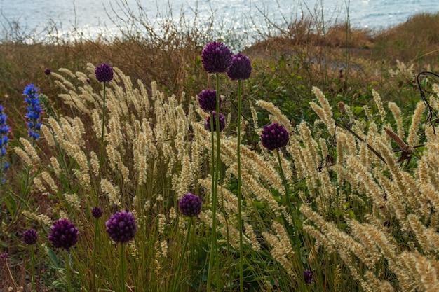L'erba delle dune soffia nel vento sul mare
