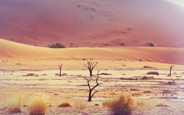 Dune e morti di alberi di acacia nel deserto del namib, dead vlei, sossusvlei, namibia, africa. famosa meta turistica