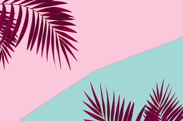 Bicolore. banner creativo con foglie tropicali su sfondo geometrico di colori vivaci. volantino per annuncio. design per biglietti d'invito, volantini. modelli di design astratti per poster, copertine, sfondi.