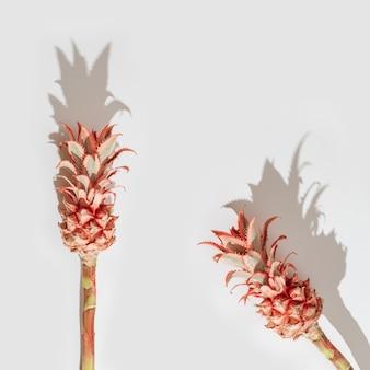 Fiori di ananas rosa ornamentali nani su sfondo bianco con luce intensa invito per le vacanze in stile minimal.