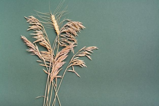 Una spiga di grano tra l'erba secca su uno sfondo verde. concetto di identità