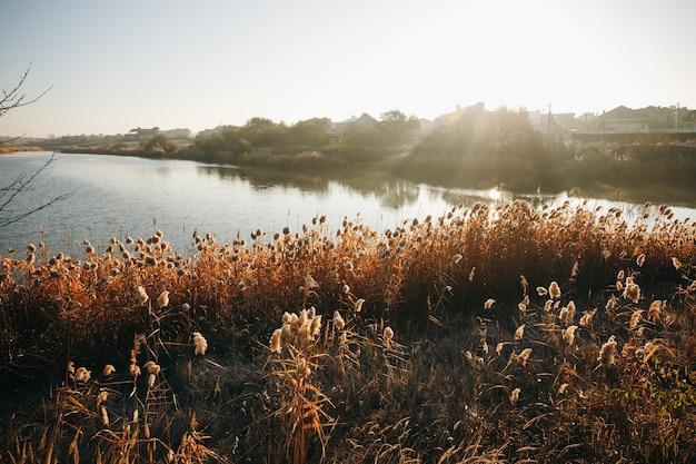 Mattina presto. lago d'autunno bello e colorato nei raggi del sole. sfondo autunnale. Foto Premium