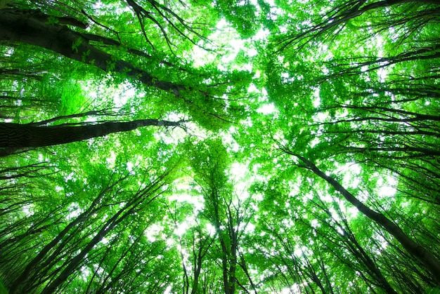 Sole mattutino nella foresta verde