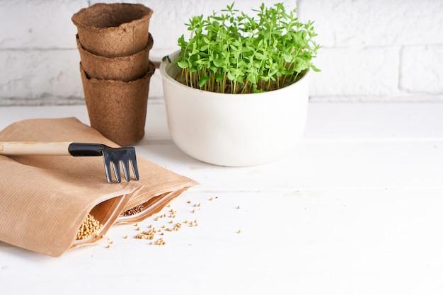 Semenzale in anticipo cresciuto dai semi in scatole sul davanzale con gli strumenti di giardinaggio