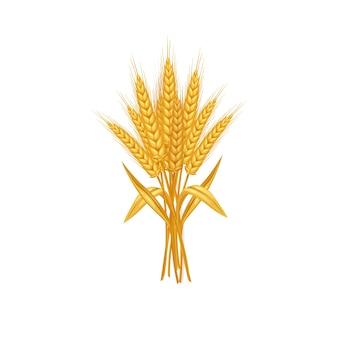 Spighe e chicco di grano isolati su sfondo bianco