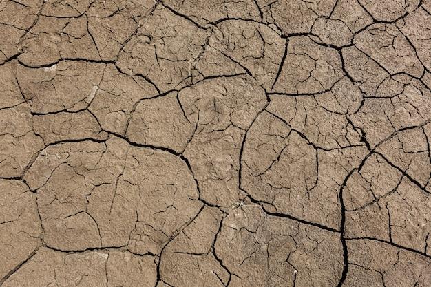 Terra a terra con crepe