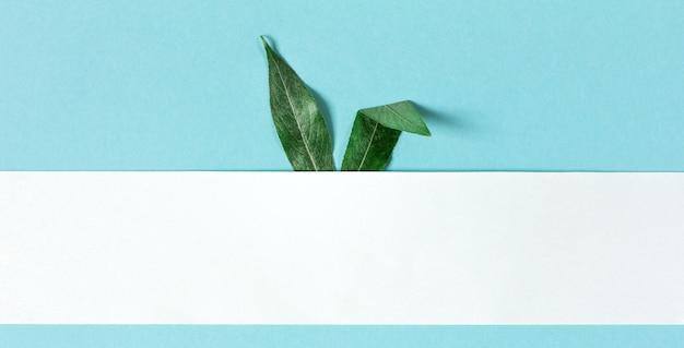 Orecchie del coniglietto di pasqua fatte delle foglie verdi su una priorità bassa blu con lo spazio della copia, carta per testo