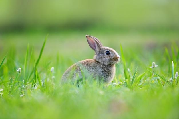 Coniglietto di pasqua con coniglio marrone sul fondo dell'erba verde della molla e del prato decorato all'aperto per il giorno di pasqua di festival - coniglio sveglio sulla natura