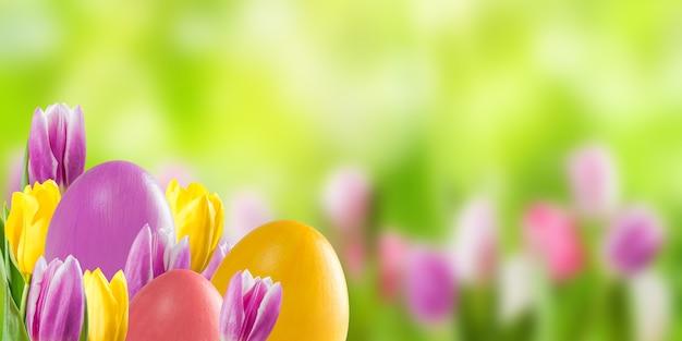 Uova colorate di pasqua e fiori di tulipano, superficie di vacanza per la tua decorazione. caccia alle uova, copia dello spazio