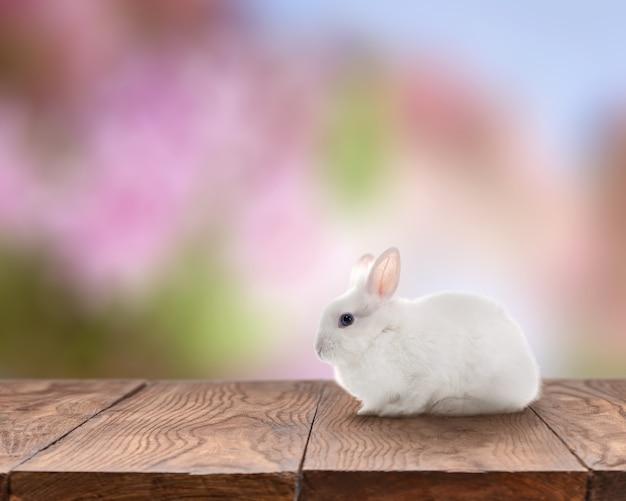 Concetto di pasqua. piccolo coniglio pasquale di colore bianco rappresentato sul tavolo di legno da solo isolato su sfondo colorato. piccolo coniglio di pasqua che guarda l'obbiettivo.