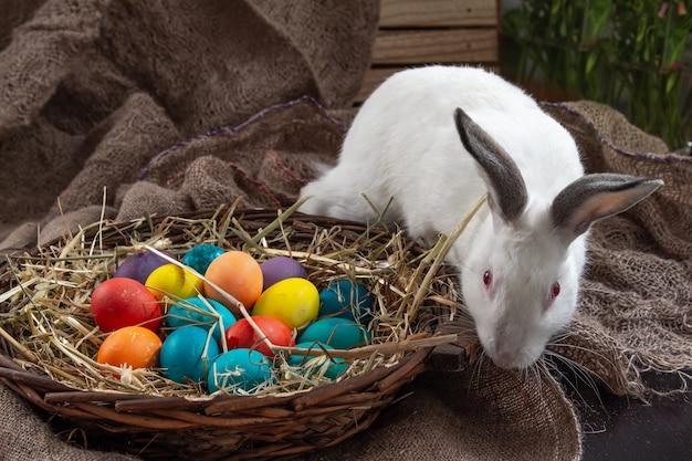 Simpatico coniglietto di pasqua con cesto di uova colorate su sfondo di tela