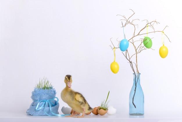 Anatroccolo di pasqua e giovane erba con le coperture delle uova