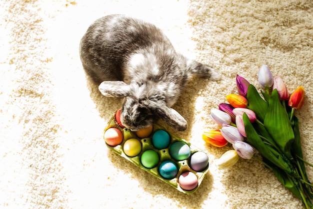 Coniglio pasquale in camera su un tappeto con uova colorate