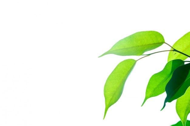 Concetto ecologico, luce solare intensa attraverso le foglie verdi