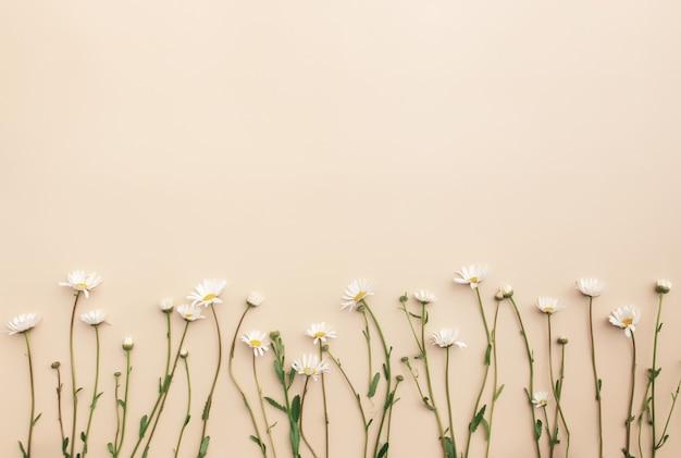 Concetto estivo ecologico su sfondo beige con fiori di camomilla eco bianco