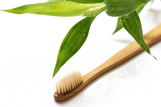 Spazzolino da denti ecologico e pianta di bambù
