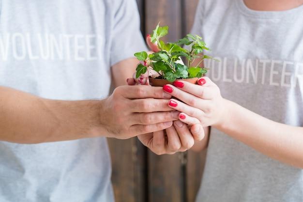 Volontariato ecologico. concetto di protezione della natura. pianta d'appartamento coltivata della holding della donna e dell'uomo.