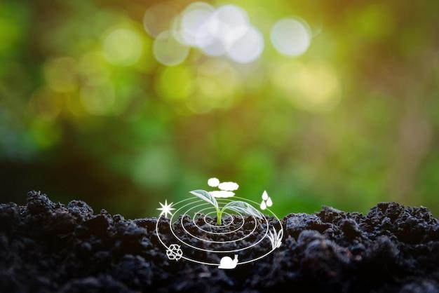 Ambiente ecologico la crescita dell'albero della piantina sfocatura dello sfondo tecnologia digitale