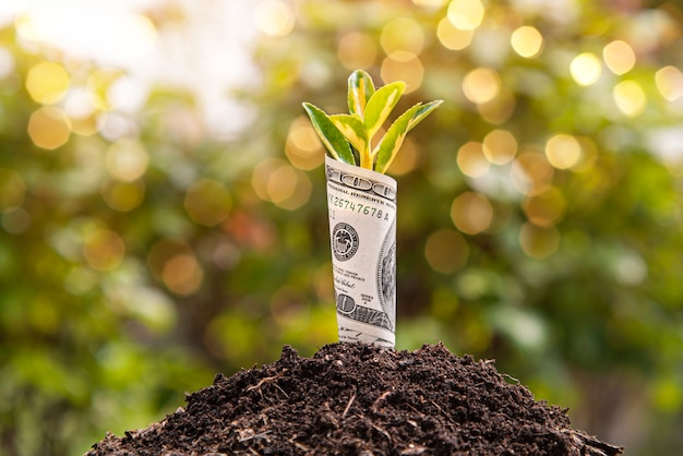 Simbolo di crescita economica una banconota da cento dollari con una pianta o una foglia che cresce dalla terra con sfondo verde sfocato