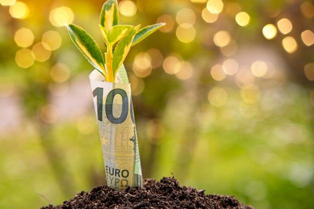 Simbolo della crescita economica: banconota da cento euro con una pianta o una foglia che cresce dalla terra con sfondo verde sfocato
