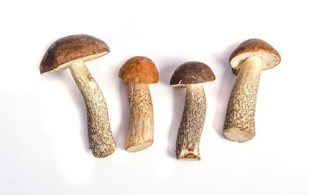 Funghi porcini selvatici commestibili isolati su sfondo bianco