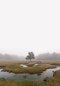 Inquietante scena nella foresta con ruscello, nebbia densa e albero isolato.
