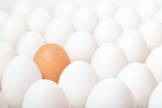 Marrone d'uovo tra una moltitudine di uova bianche. concetto di differenza.