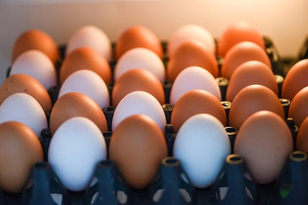 Uova in frigorifero per la conservazione in cucina di casa, uova fresche di gallina e uova di anatra in scatola