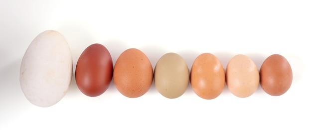 Uova di varie dimensioni e colori su una superficie bianca
