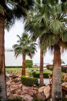 Hotel tropicale egiziano