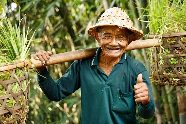 Anziano contadino idonesiano a bali che lavora nel suo campo di riso