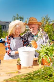 Signora anziana. bella signora anziana che porta il cappello di paglia che tiene i fiori di campo bianchi e viola che si siedono vicino a suo marito