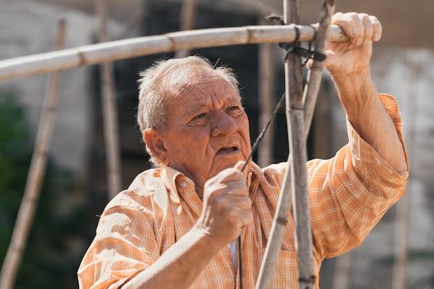 Uomo anziano che costruisce una struttura di canne per coltivare pomodori