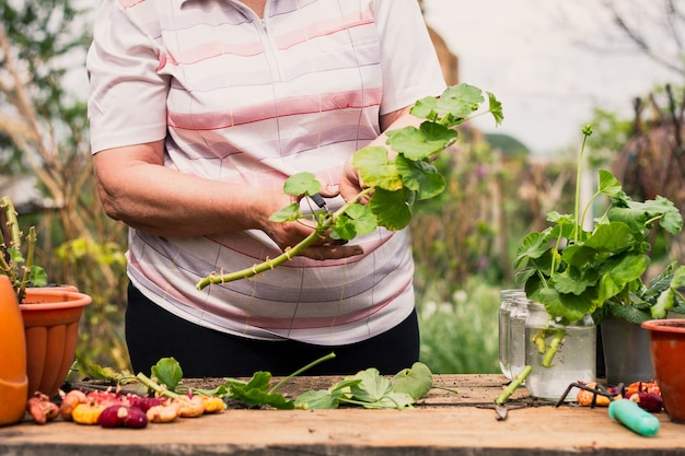 Donna anziana di etnia caucasica in abiti leggeri taglia un fiore di pianta verde con le forbici all'aperto