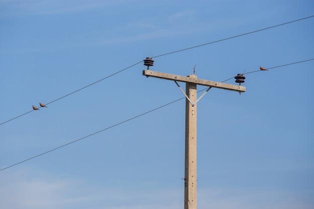 Palo elettrico e piccioni stanno sui fili con lo sfondo del cielo azzurro