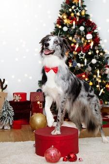 Elegante trucco per cani presente che celebra il natale che indossa un papillon rosso sotto le luci dell'albero e la decorazione delle feste