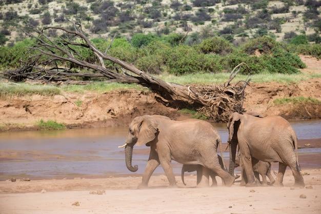 Una famiglia di elefanti sulle rive di un fiume nel mezzo del parco nazionale