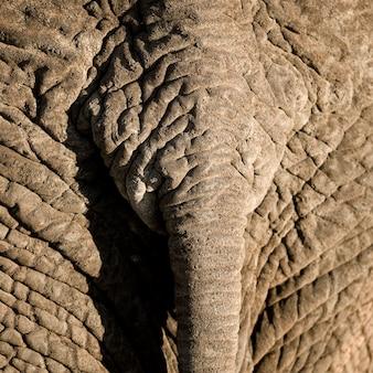 Primo piano della coda di elefante