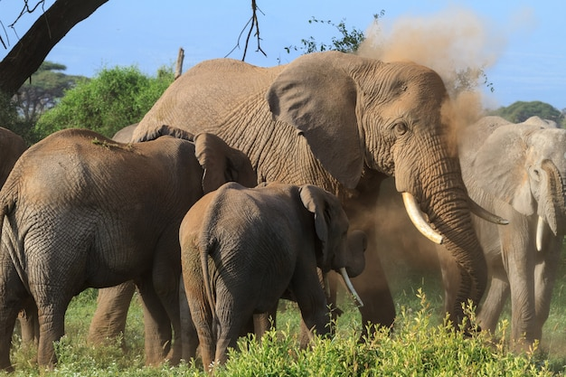 Elefanti nella palude verde in kenya