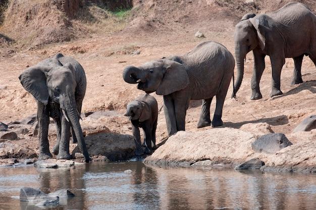 Elefanti in kenya