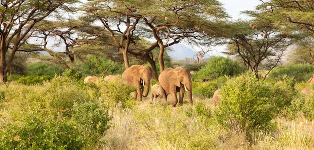 Gli elefanti camminano attraverso la giungla tra molti cespugli