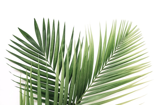 Vista elevata delle foglie di palma verdi sopra fondo bianco
