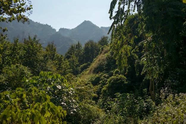 Vista elevata degli alberi, luang prabang, laos