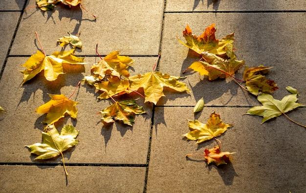 Foglie gialle autunnali si trovano su un parco ed 'pista lastricata di piastrelle di cemento grigio al sole.
