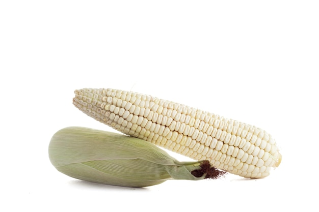 Elote de maiz blanco con fondo blanco