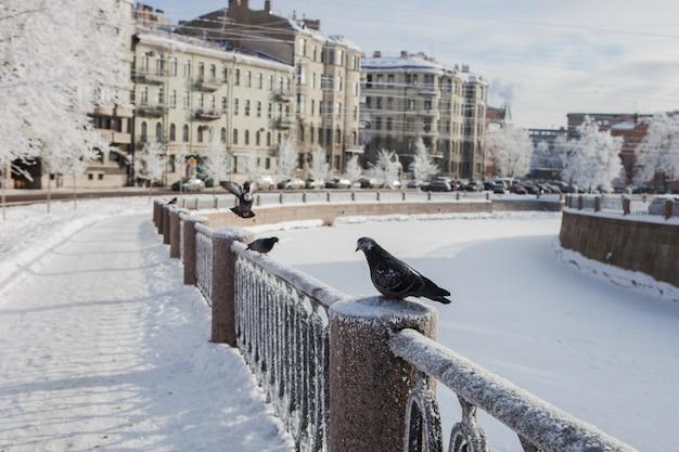 L'argine del canale della città coperto di neve con uccelli congelati seduti su di esso, rami di alberi nel gelo