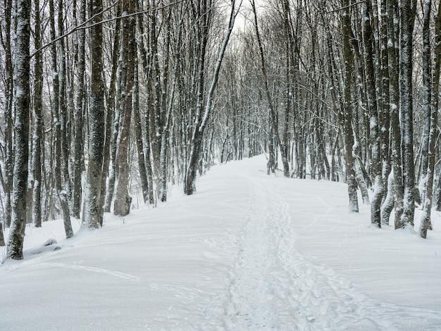 Vicolo vuoto in una foresta invernale innevata