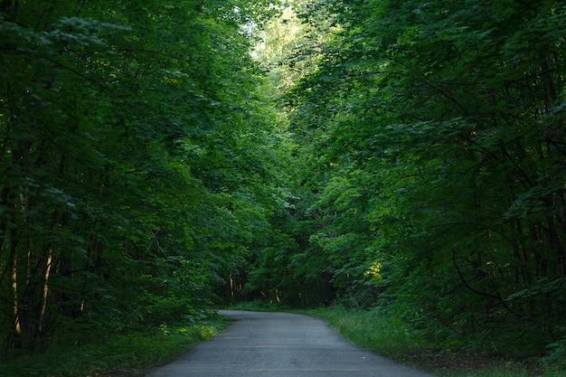 Strada asfaltata vuota nella foresta estiva colorata