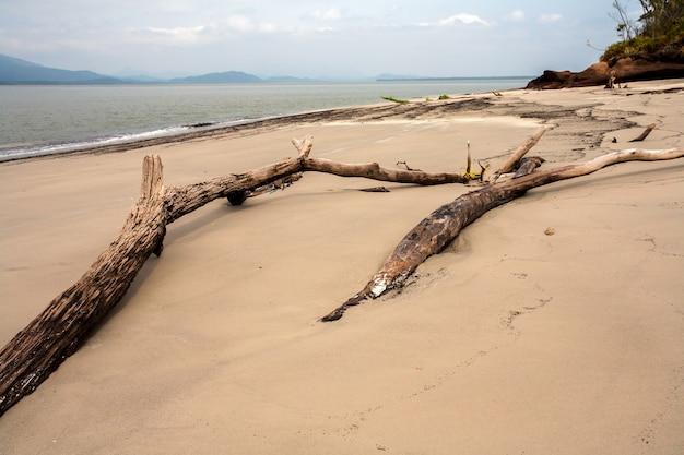 Spiaggia vuota con tronchi nella sabbia
