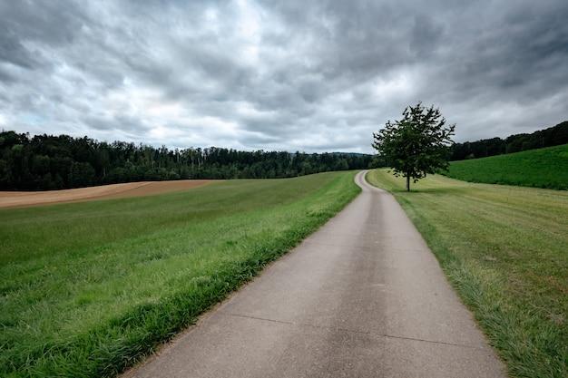 Una strada di campagna vuota attraverso i campi verdi in una nuvolosa giornata estiva. sullo sfondo la foresta. nubi di tempesta grigie. albero solitario lungo la strada